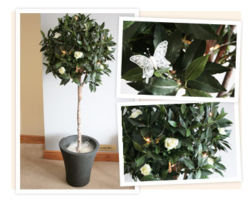 Bay Trees to hire with Flowers and Butterflies